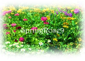 SpringRose9's Profile Picture