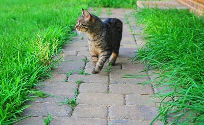 Cat Walks by GrahamCracker34