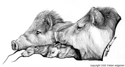 Chacoan Peccaries by scatteredsun