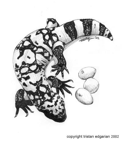 gila monster by scatteredsun gila monster drawing