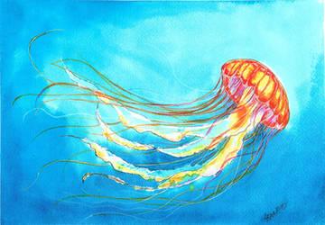 Jellyfish by Sitriel