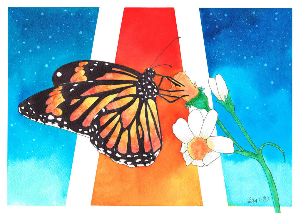 Butterfly by Sitriel