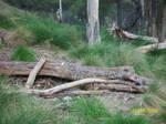 Fallen Tree Log - Unrestricted