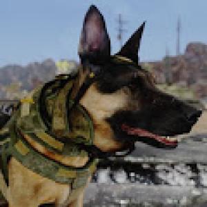 Missilekite's Profile Picture