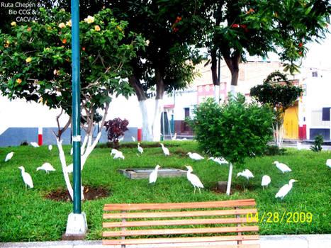8 2009 Plaza de Armas