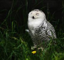 Snow Owl by ksushiks