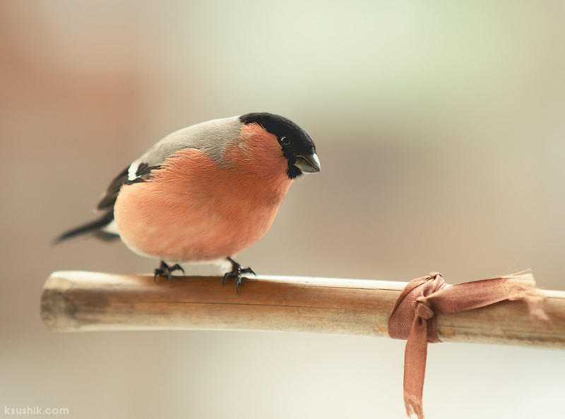 Spring Bird by ksushiks