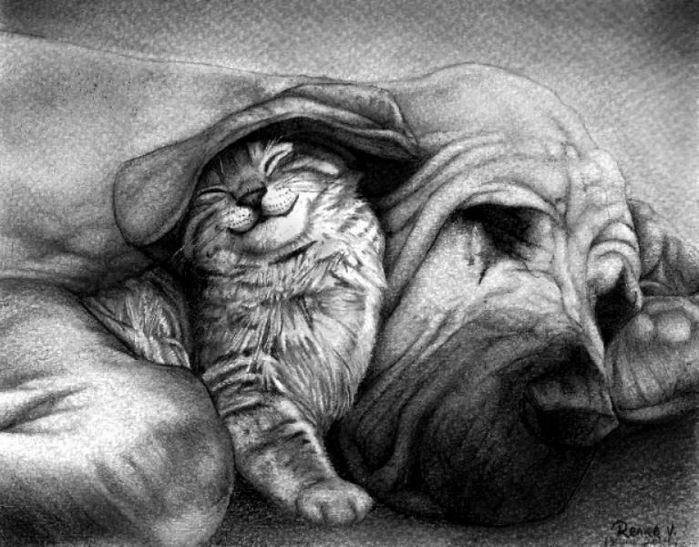 Gato Y Perro by reniervivas666