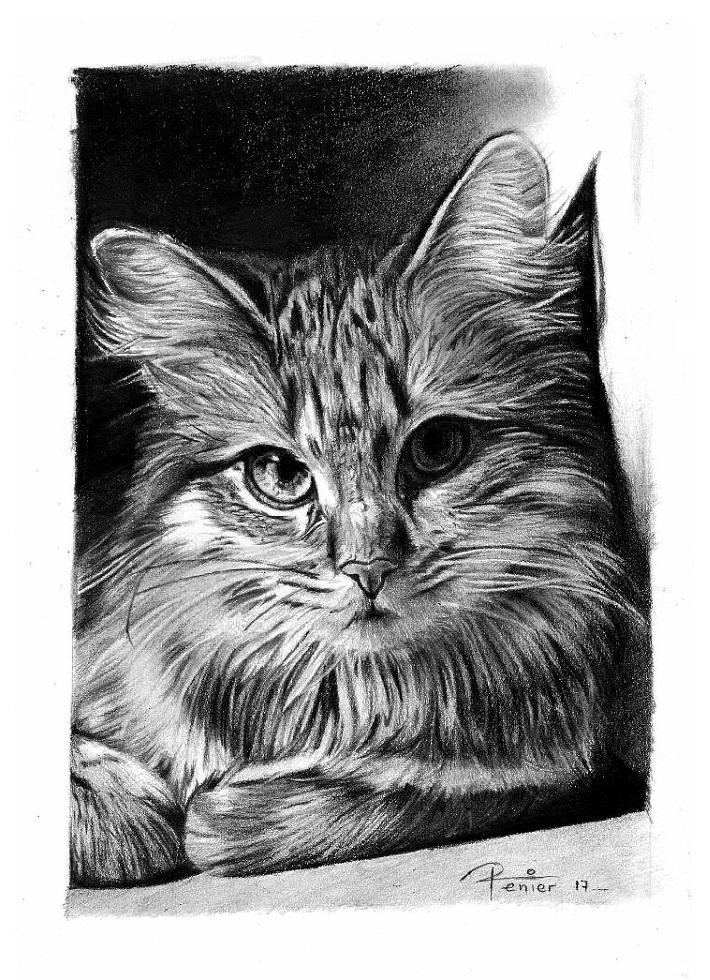 cat by reniervivas666
