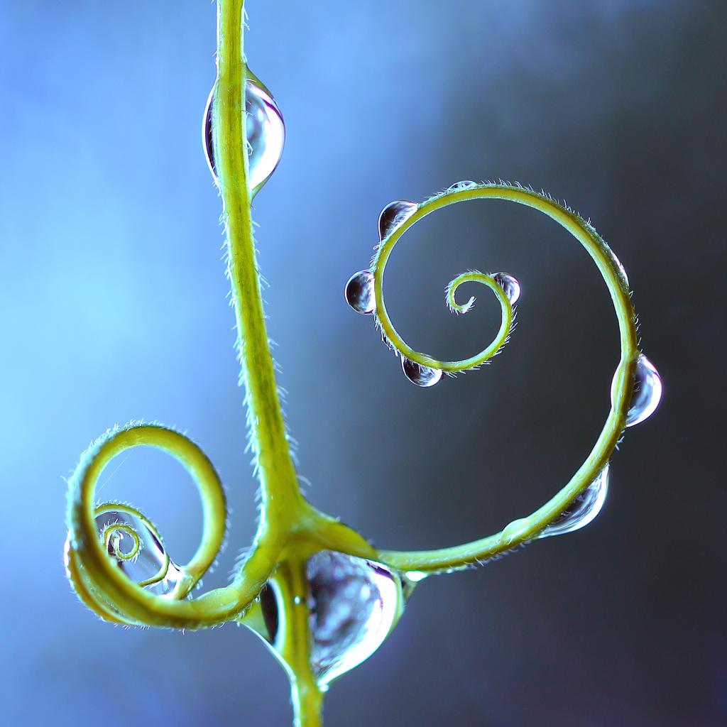 Spiral by Mars-Hill