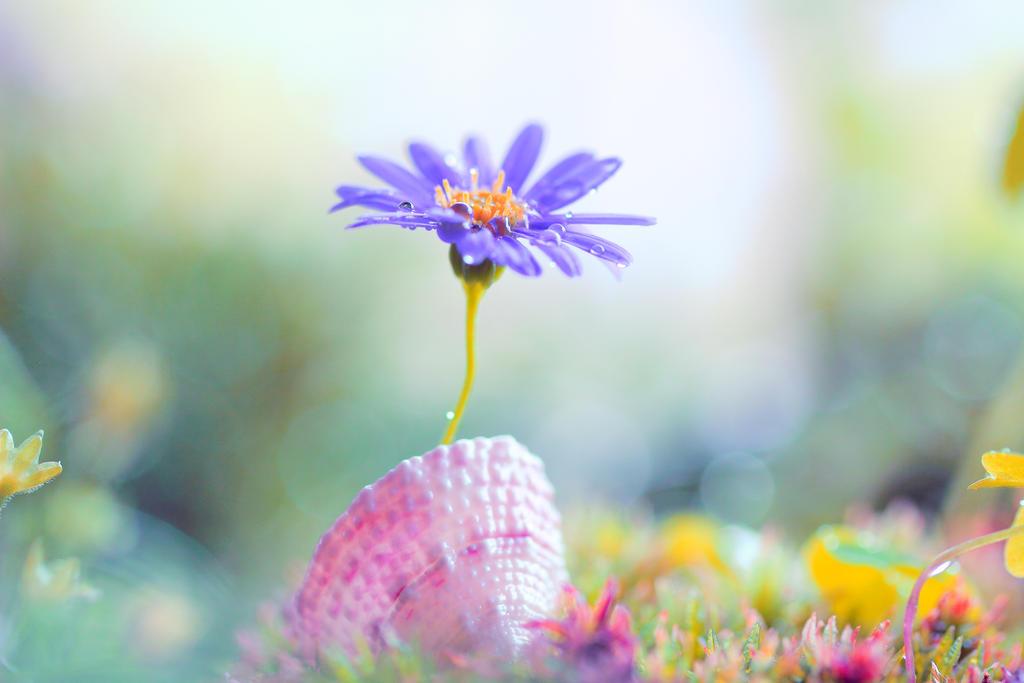 springlike by Mars-Hill