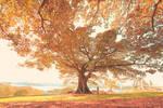 Everyday, It's Always Autumn.