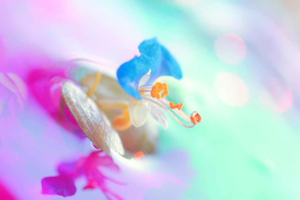 Dayflower by Mars-Hill