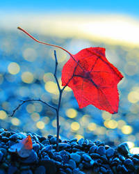 Red Leaf by Mars-Hill