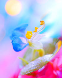 Duck Flower