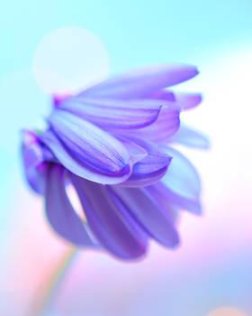 Bed Hair Flower