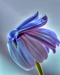 Rabbit Flower