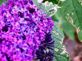 Purple by Jungle-UrbanWarrior