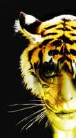 tiger by Jungle-UrbanWarrior