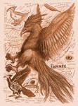 Phoenix Anatomy Study Page