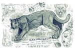 Black Mountain Lion (Alien Big Cat) by Kway100