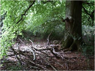 Treeness by UnicornReality