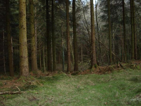 Treeage moar