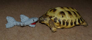 Shark vs Tortoise by UnicornReality