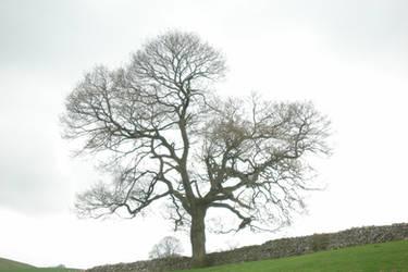 That Tree Again by UnicornReality