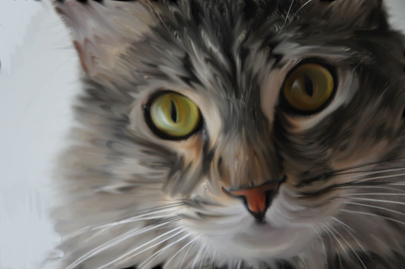 Tabby cat smudge tool edit by silversmicee on deviantart tabby cat smudge tool edit by silversmicee sciox Gallery