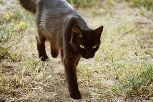 Mama Kitty by ibjennyjenny