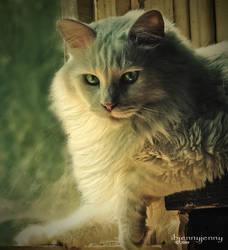 I'm only a cat by ibjennyjenny