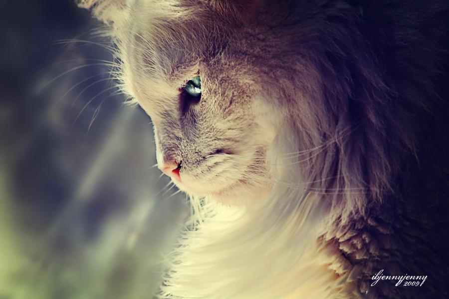 Lend Me a Kitten