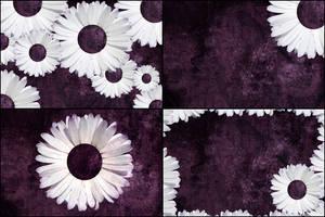 4 Free Purple Daisy Tumblr Backgrounds