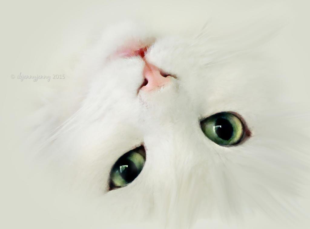 Cat Hair by ibjennyjenny