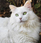 Deaf Cats Want to Play Outside Too