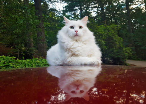 My Senior Cat