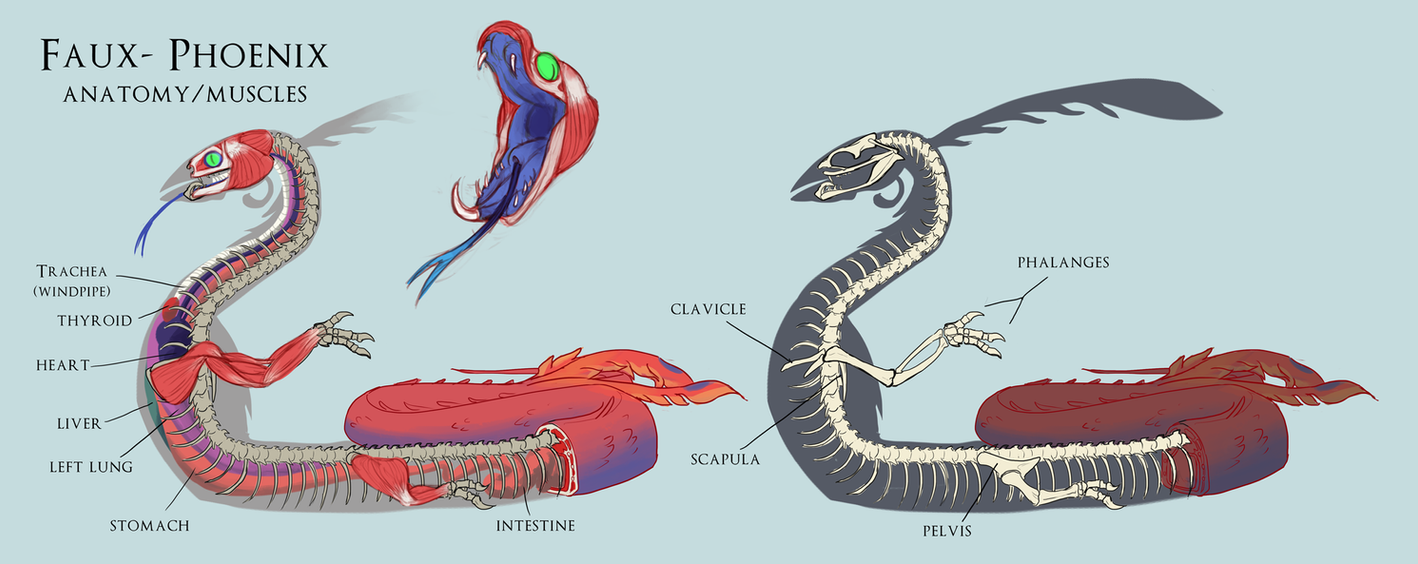 The Faux Phoenix Anatomy By Teadino On Deviantart