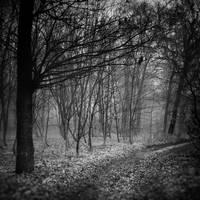 Invitation to insomnia II by WiciaQ