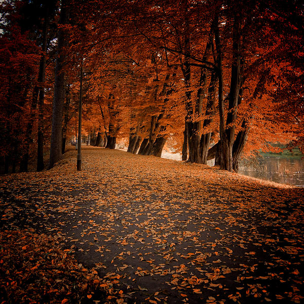 Polish golden autumn by WiciaQ