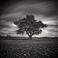 Tree Of Pain by WiciaQ