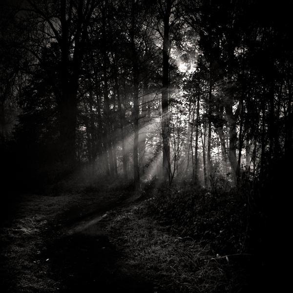 follow_the_light_by_wiciaq.jpg