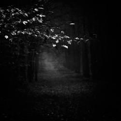 Light and shadow - study XXII