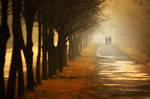 walk in the fog by WiciaQ