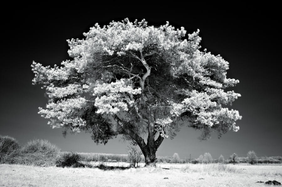 Powerful contrast by WiciaQ