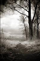 Secret path by WiciaQ