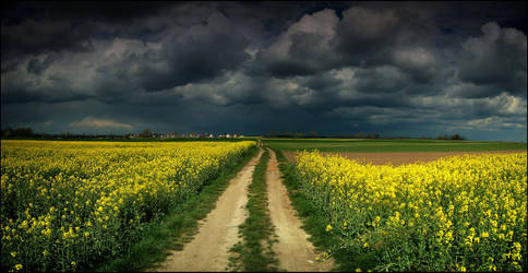 Clouds over the golden fields