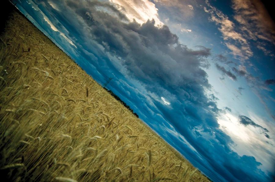 In the golden ocean by WiciaQ