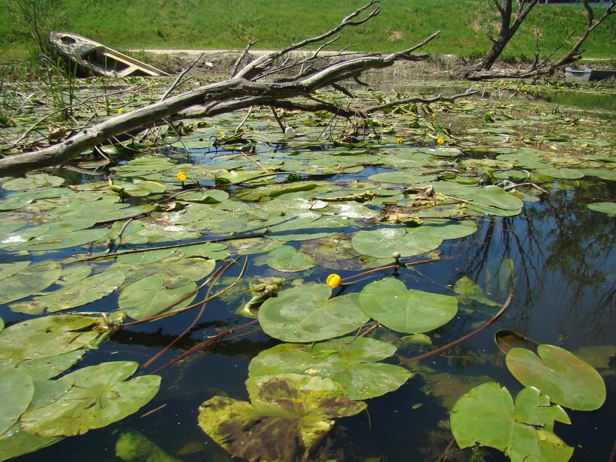 Swamp. by bezosjecajna