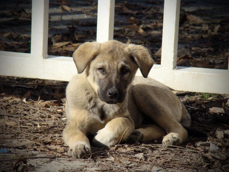 Stray pup by bezosjecajna